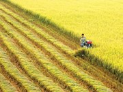 Transformer l'agriculture vietnamienne : Gagner plus avec moins