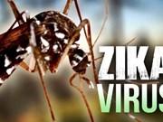 Ho Chi Minh-Ville: découverte de 17 cas de virus Zika