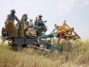 La Thaïlande annonce le nouveau programme de subvention de riz
