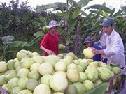 Les fruits et légumes pourraient rapporter 2,6 mds d'USD