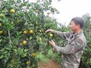 Hoa Binh : ouverture de la 2e Fête des oranges de Cao Phong