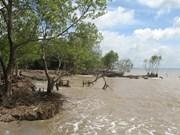 Tien Giang: l'érosion s'aggrave dans les zones côtières