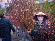 Le marché aux fleurs de Quang Ba, une destination à ne pas manquer à l'occasion du Têt