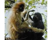 La réserve naturelle de Muong La a vu le jour