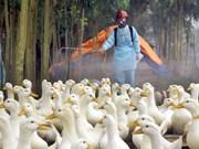 Des localités renforcent les mesures de lutte contre la grippe aviaire chez l'homme