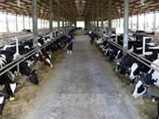 Inauguration d'une ferme laitière bio aux normes européennes au Vietnam