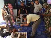 Thaïlande : bébés orangs-outans et tortues sauvés de la contrebande