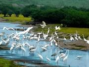 Pour bien préserver les zones ornithologiques importantes au Vietnam