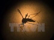 La dengue fait 122 morts en Malaisie depuis le début de l'année
