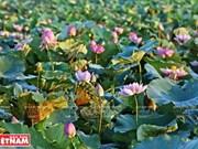 Le lac aux lotus de Ninh Xa