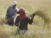 Le Bangladesh va acheter un million de tonnes de riz au Cambodge