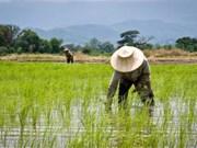 Thaïlande : de nouvelles initiatives pour assister les agriculteurs
