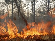 SEA Games : la Malaisie demande à l'Indonésie de contrôler ses émissions de fumées