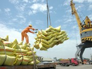 En 2020, le riz rapportera au pays 2,3 milliards de dollars