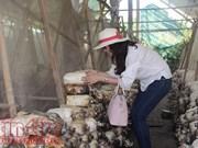 HCM-Ville en quête de solutions pour promouvoir son tourisme agricole