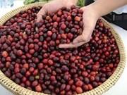 Les exportations nationales de café bénéficient des cours élevés