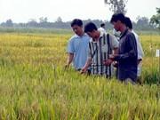 La République de Corée élargit l'expérimentation des techniques de culture bio à Hau Giang