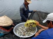 Les crues, un don de la nature pour le delta du Mékong