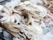Forte hausse des exportations de céphalopodes vers la Chine