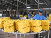 Les exportations nationales du caoutchouc franchissent la barre des 2 milliards de dollars