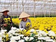 Un nouveau village traditionnel de la floriculture à Dà Lat