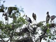 Développer l'écotourisme dans le parc national de Tram Chim