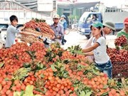 Lier la production agricole pour gagner des parts de marché