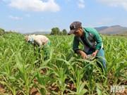 1.630 milliards de dongs pour le développement de la production dans les communes démunies
