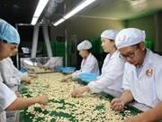 Le Vietnam aide le Cambodge à augmenter sa production de noix de cajou