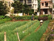 L'agriculture bio, une tendance inéluctable au Vietnam