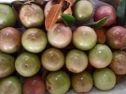 Une décennie d'efforts pour exporter des pommes étoilées vers les États-Unis