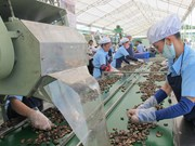 Nécessité d'élever la valeur ajoutée de la noix de cajou du Vietnam