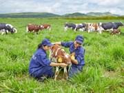 Vinamilk construira quatre fermes laitières à Thanh Hoa