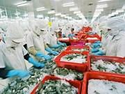 Crevettes fraîches entières: de belles opportunités d'exportation en Australie