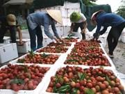 Le Vietnam vise les 10 milliards d'USD d'exportations de fruits et légumes sous peu