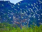 Spectacle féérique à l'île aux aigrettes de Gia Lac