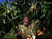 Vietnam - Mexique : opportunités de coopération dans l'agriculture
