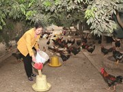 Hanoï: des changements miraculeux au sein des ethnies minoritaires