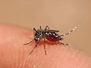 La Thaïlande fait face au risque d'épidémie de dengue au Nord-Est