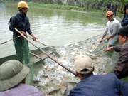 Hanoï: 13 projets d'élevage aquacole intensif dans 10 districts