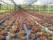 Agriculture : les Pays-Bas souhaitent établir un partenariat avec Can Tho