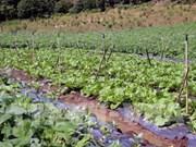 De nombreux projets d'investissement dans l'agriculture high-tech à Quang Tri