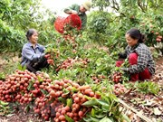 Fruits et légumes : hausse de 20% du chiffre d'affaires à l'export au premier semestre
