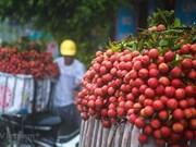 Les litchis vietnamiens débarquent en Malaisie