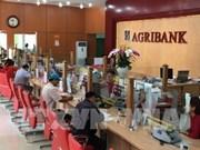 Agribank accorde des crédits à taux préférentiels à l'agriculture high-tech