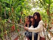 Lam Dong crée une percée dans son agritourisme