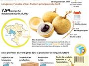 [Infographie] Le Nord enregistre une bonne récolte de longane
