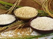 L'Egypte importera un million de tonnes de riz blanc vietnamien