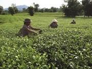 Phu Tho s'attèle à la réduction durable de la pauvreté