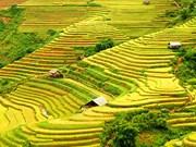 "Bientôt la Semaine ""À travers les champs en terrasses de Hoang Su Phi"""